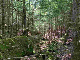 Photo 4: Lot 12 Otter Point Road in East Chester: 405-Lunenburg County Vacant Land for sale (South Shore)  : MLS®# 202013353