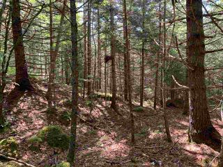 Photo 5: Lot 12 Otter Point Road in East Chester: 405-Lunenburg County Vacant Land for sale (South Shore)  : MLS®# 202013353