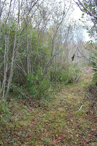 Photo 5: Lot 1 Lake Doucette Road in Lake Doucette: 401-Digby County Vacant Land for sale (Annapolis Valley)  : MLS®# 202021484