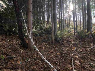 "Photo 4: LOT 89 SKOOKUMCHUK Road in Sechelt: Sechelt District Land for sale in ""SANDY HOOK"" (Sunshine Coast)  : MLS®# R2416111"