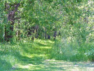 Photo 21: 8 Beech Ave & Pine Parkway: Rural Wetaskiwin County Rural Land/Vacant Lot for sale : MLS®# E4195404