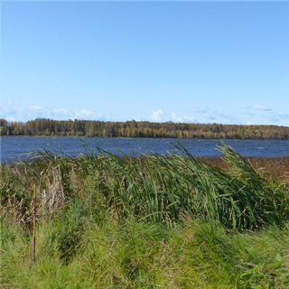 Photo 26: 55001 Twp 465: Rural Wetaskiwin County Cottage for sale : MLS®# E4175004