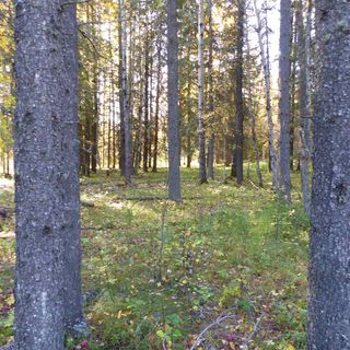Photo 19: 55001 Twp 465: Rural Wetaskiwin County Cottage for sale : MLS®# E4175004
