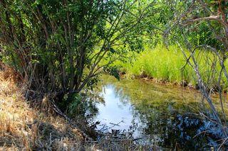 Photo 20: 82 200 4 Avenue SW: Sundre Land for sale : MLS®# C4299239