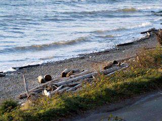 "Photo 2: 1810 OCEAN BEACH Esplanade in Gibsons: Gibsons & Area House for sale in ""Bonniebrook"" (Sunshine Coast)  : MLS®# R2519828"