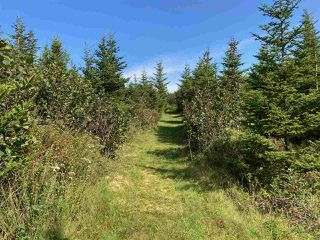 Photo 28: 202 Bakers Road in Marie Joseph: 303-Guysborough County Residential for sale (Highland Region)  : MLS®# 202019034