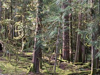 Photo 3: 657 Gowlland Rd in : Hi Western Highlands Land for sale (Highlands)  : MLS®# 858056