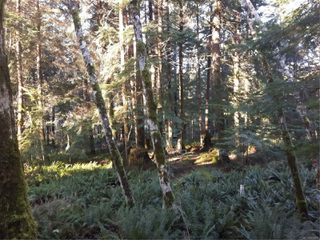 Photo 23: Lot 1 Bold Point Rd in : Isl Quadra Island Land for sale (Islands)  : MLS®# 858097