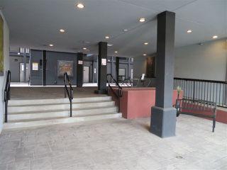 Photo 24: 210 10518 113 Street in Edmonton: Zone 08 Condo for sale : MLS®# E4167591