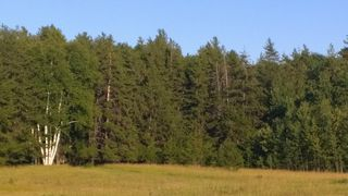 Photo 25: #2-51223 RGE RD 270 Road: Rural Parkland County Rural Land/Vacant Lot for sale : MLS®# E4133462
