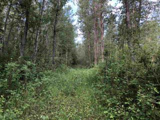 Photo 23: 624 Rge Rd 251: Rural Athabasca County Rural Land/Vacant Lot for sale : MLS®# E4137881