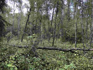 Photo 19: 624 Rge Rd 251: Rural Athabasca County Rural Land/Vacant Lot for sale : MLS®# E4137881