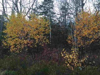 Photo 2: Lot 4 Beech Hill Road in Hunt's Point: 406-Queens County Vacant Land for sale (South Shore)  : MLS®# 201728019