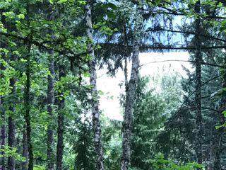 """Photo 9: LOT 115 LILLOOET LAKE Estates in Pemberton: Lillooet Lake Land for sale in """"LILLOOET LAKE ESTATES"""" : MLS®# R2187599"""