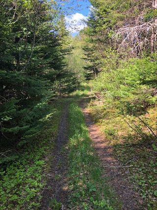 Photo 1: 179 Portage Road in Wilburn: 306-Inverness County / Inverness & Area Vacant Land for sale (Highland Region)  : MLS®# 202001392