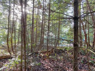 Photo 11: Lt 37 Pat Burns Ave in : Isl Gabriola Island Land for sale (Islands)  : MLS®# 859556