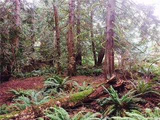 Photo 8: 1835 Radway Rd in UCLUELET: ML Shawnigan Land for sale (Malahat & Area)  : MLS®# 755429