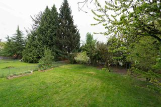 Photo 13: 26448 29 Avenue in Langley: Aldergrove Langley House for sale : MLS®# R2263674
