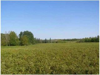 Photo 8: SW CORNER TWP RD 534 & RR 222: Rural Strathcona County Rural Land/Vacant Lot for sale : MLS®# E4148557