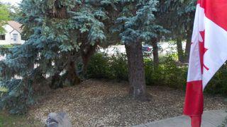 Photo 24: 10662 61 Avenue in Edmonton: Zone 15 House for sale : MLS®# E4160589