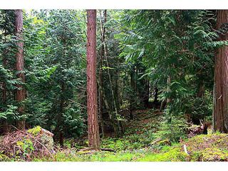 Photo 12: LT 11 GAINES ROAD: Saturna Island Land for sale (Islands-Van. & Gulf)  : MLS®# V1126843