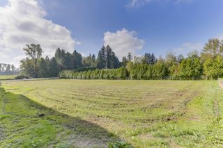 "Photo 6: 25965 24 Avenue in Langley: Otter District House for sale in ""Willpower Stables"" : MLS®# R2503545"