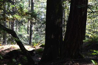 Photo 15: LOT 71 WEST BAY Road: Gambier Island Land for sale (Sunshine Coast)  : MLS®# R2313942