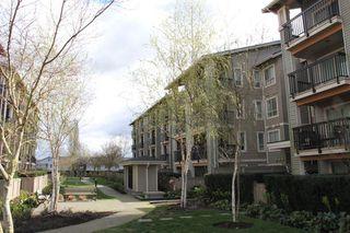 """Photo 15: 314 21009 56 Avenue in Langley: Salmon River Condo for sale in """"Cornerstone"""" : MLS®# R2048798"""