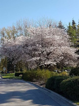 Photo 40: 689 GATENSBURY Street in Coquitlam: Central Coquitlam Land for sale : MLS®# R2162020