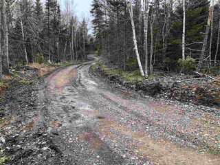 Photo 6: LOT Levi White Road in Kings Head: 108-Rural Pictou County Vacant Land for sale (Northern Region)  : MLS®# 201912086