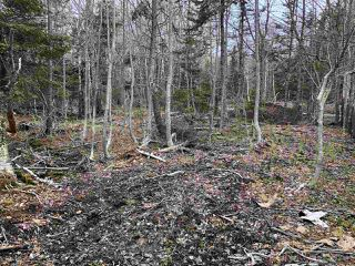Photo 4: LOT Levi White Road in Kings Head: 108-Rural Pictou County Vacant Land for sale (Northern Region)  : MLS®# 201912086