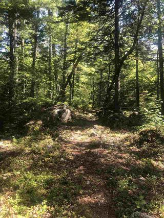 Photo 8: 61 Twin Lake Road in Maitland Bridge: 400-Annapolis County Vacant Land for sale (Annapolis Valley)  : MLS®# 202018903