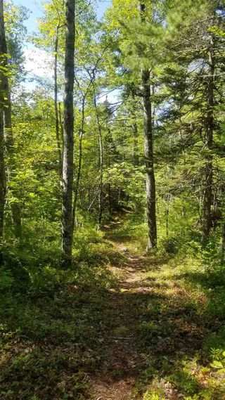 Photo 11: 61 Twin Lake Road in Maitland Bridge: 400-Annapolis County Vacant Land for sale (Annapolis Valley)  : MLS®# 202018903