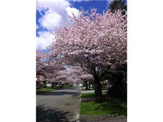 Photo 20: 6636 RANDOLPH AV in Burnaby: Upper Deer Lake House for sale (Burnaby South)  : MLS®# V1031026
