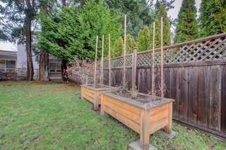 Photo 22: 2428 Dalhousie St in VICTORIA: OB Estevan Single Family Detached for sale (Oak Bay)  : MLS®# 777022