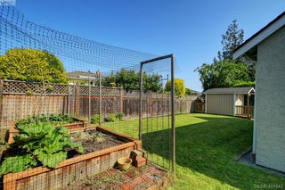 Photo 18: 3131 Kingsley Street in VICTORIA: SE Camosun Single Family Detached for sale (Saanich East)  : MLS®# 411643