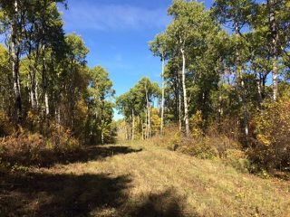 Photo 8: 134 320 acres Road North in Dauphin: RM of Dauphin Farm for sale (R30 - Dauphin and Area)  : MLS®# 1918190
