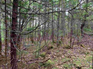 Photo 3: Lot 34 Balsam Street in Beechville: 40-Timberlea, Prospect, St. Margaret`S Bay Vacant Land for sale (Halifax-Dartmouth)  : MLS®# 202013356