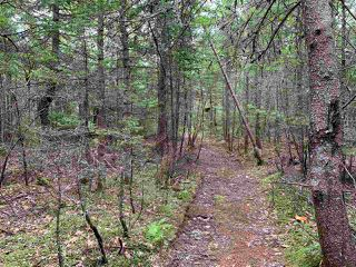 Photo 4: Lot 34 Balsam Street in Beechville: 40-Timberlea, Prospect, St. Margaret`S Bay Vacant Land for sale (Halifax-Dartmouth)  : MLS®# 202013356