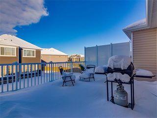 Photo 22: 10706 CITYSCAPE Drive NE in Calgary: Cityscape House for sale : MLS®# C4093905