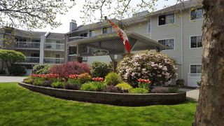 Photo 7: 202 22514 116 AVENUE in Maple Ridge: East Central Condo for sale : MLS®# R2162618