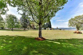 Photo 19: 16847 PEACE PARK Drive in Surrey: Pacific Douglas House for sale (South Surrey White Rock)  : MLS®# R2264462