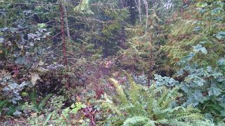 Main Photo: LOT 25 DEERHORN Drive in Sechelt: Sechelt District Land for sale (Sunshine Coast)  : MLS®# R2120533