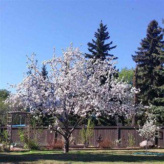 Photo 27: 7628 41 Avenue in Edmonton: Zone 29 House for sale : MLS®# E4208414