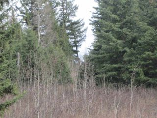 Photo 7: LOT 1 LIKELY Road in Williams Lake: Williams Lake - Rural East Land for sale (Williams Lake (Zone 27))  : MLS®# R2052679