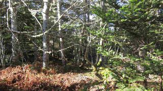 Photo 9: Lot 2 Matthew's Lake Road in Little Harbour: 407-Shelburne County Vacant Land for sale (South Shore)  : MLS®# 202023324