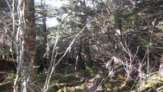 Photo 10: Lot 2 Matthew's Lake Road in Little Harbour: 407-Shelburne County Vacant Land for sale (South Shore)  : MLS®# 202023324