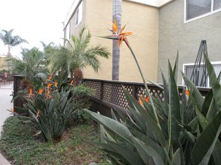 Photo 15: CLAIREMONT Condo for sale : 2 bedrooms : 6750 Beadnell Way #51 in San Diego
