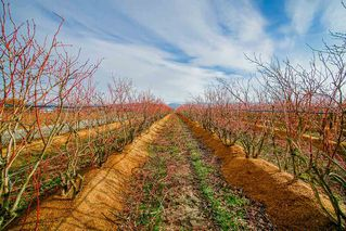 Photo 4: 41193 TAYLOR Road in Mission: Dewdney Deroche Land for sale : MLS®# R2506788