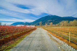 Photo 11: 41193 TAYLOR Road in Mission: Dewdney Deroche Land for sale : MLS®# R2506788